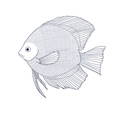 discus: Discus. Sketch of aquarium fish. Vector