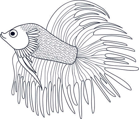 ichthyology: Fish Cockerel. Sketch of aquarium fish. Vector