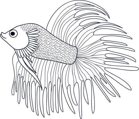 ichthyology: Fish Cockerel. Sketch of aquarium fish. Vector