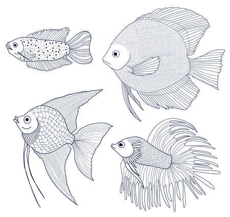 scalar: Set of 4 species of fish. Dwarf gourami, Scalar, Discus, Fish Cockerel. Sketch of aquarium fishes. Vector