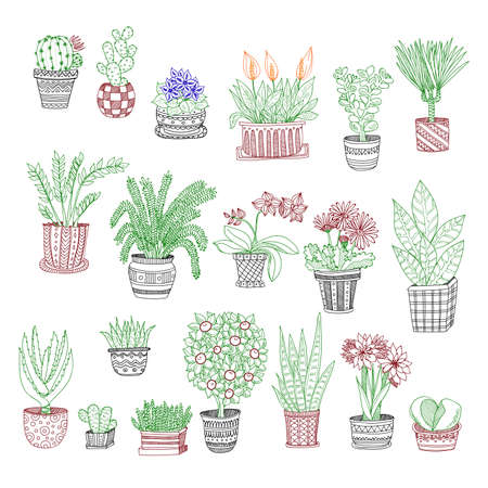 ferns and orchids: Big set of cute hand drawn house plants in pots including cactus, dracena, aloe and others. Vector collection of doodle plants