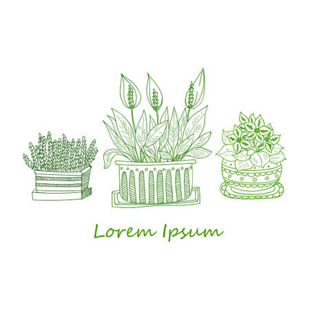 house plants: Composition with cute hand drawn house plants in ornamental pots. Doodle style. Vector