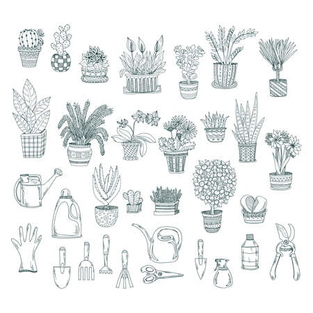 house plants: Big set of cute hand drawn house plants in pots including cactus, dracena, aloe and others and garden tools. Vector collection of doodle plants