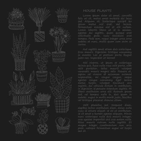 house plants: Hand drawn card template with cute house plants in pots including cactus, dracena and others. Vector collection of doodle plants