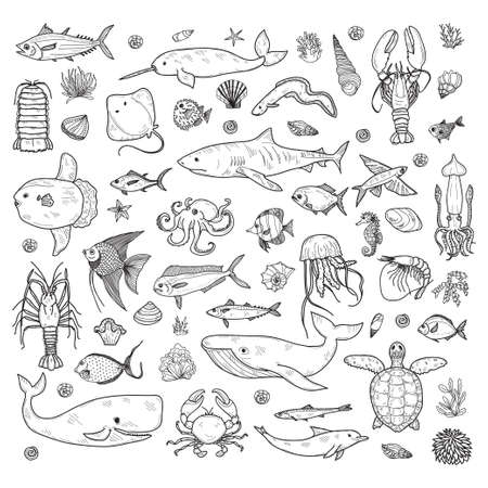 Big set of cute hand drawn marine animals, fish and shells. Vector outline background. May use as coloring page. Illustration