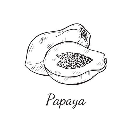 Cute hand drawn vector papaya sketch. Page for coloring fruit.