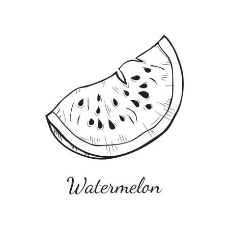 Cute hand drawn vector watermelon sketch. Page for coloring fruit.
