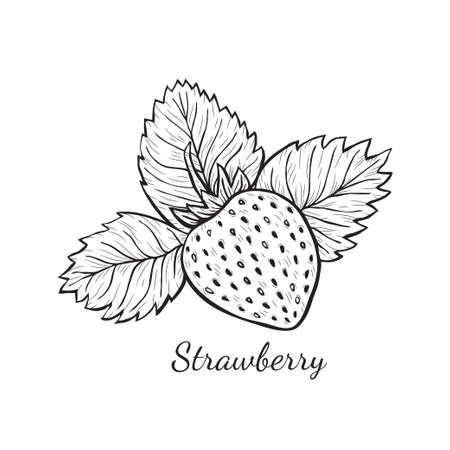 Cute hand drawn vector strawberry sketch. Page for coloring fruit.