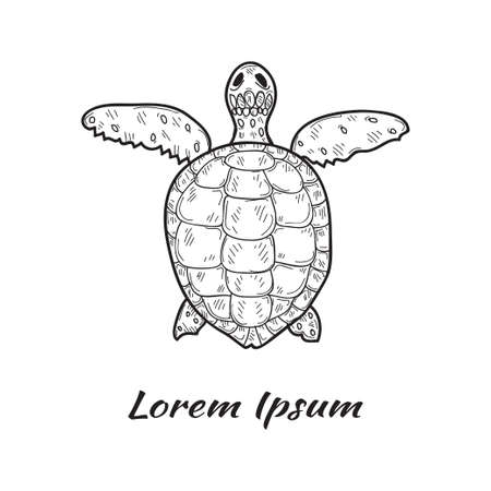 Vector illustration with cute hand drawn turtle. Marine animals collection. Outline sketch. May use as a coloring page Ilustracja