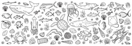 Banner with cute hand drawn marine animals, fish and shells. Vector illustration.  May use as coloring page. Illustration
