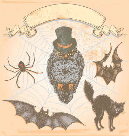 halloween spider: Hand Drawn Vintage Halloween Spooky Owl Vector Set  Colour fills are grouped separately from outlines for easy editing  Illustration