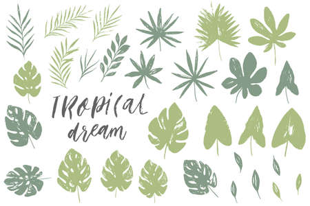 Vector set with isolated textured hand drawn leaves on white background. Vector tropical palm leaves, jungle, split leaf, philodendron, monstera. Jungle trees and plants. Botanical floral illustration
