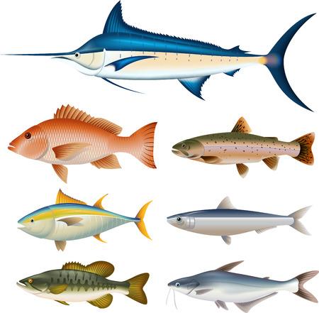 Cartoon raccolta di pesci Archivio Fotografico - 38043555