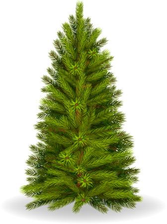 arbol de pino: Ilustraci�n del �rbol de pino