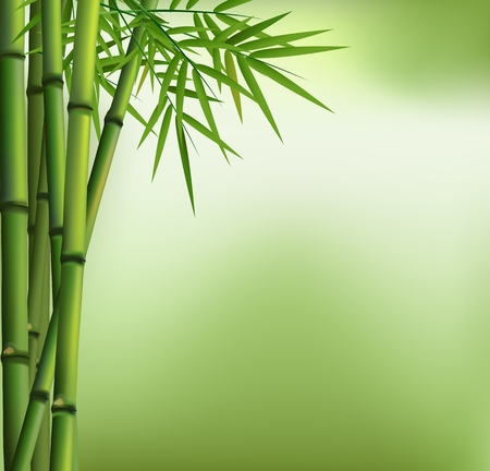 Green bamboo grove isolated on green background Ilustração