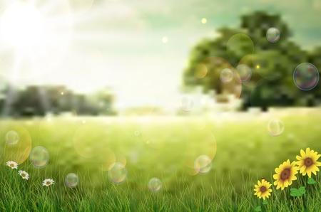 Background sunflower Vector