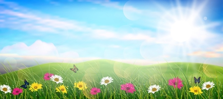 Beautiful spring meadow colorful flowers