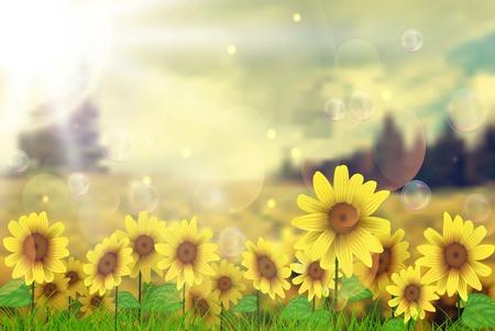 Summer sun over the sunflower field Vector