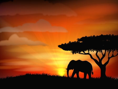 south african: African elephant against a perfect South African sunset sky