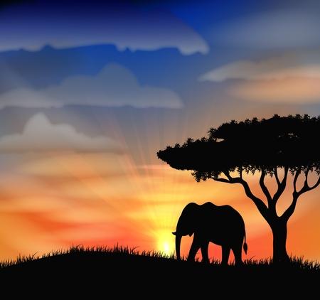 landscape vector: Sunset at africa