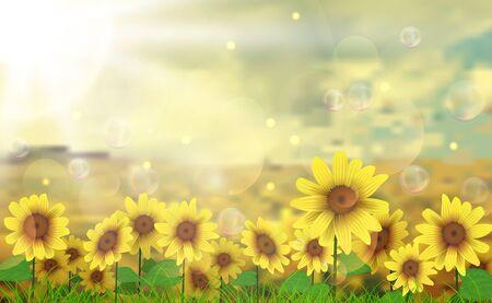 sunflower field: Summer sun over the sunflower field