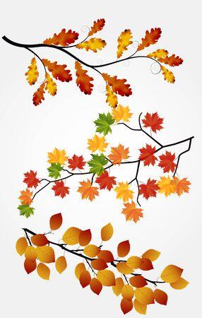 caida libre: Hojas de otoño sobre fondo blanco