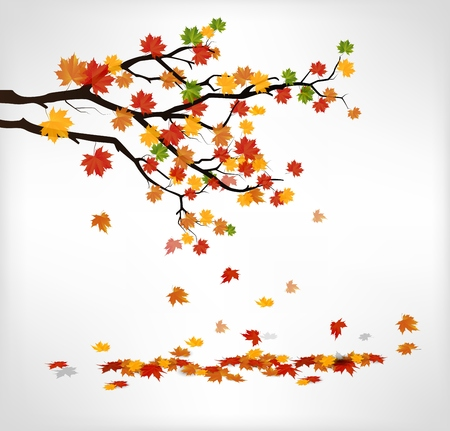 autumn leaves falling: Autumn branch with falling leaves Stock Photo