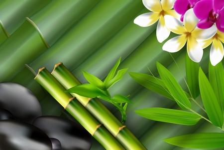 bambu: Bambú, piedras, hojas de bambú y flores de fondo.