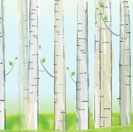 colorado mountains: Aspen forest. vector Illustration