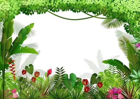 tropical tree: Tropical background beautiful