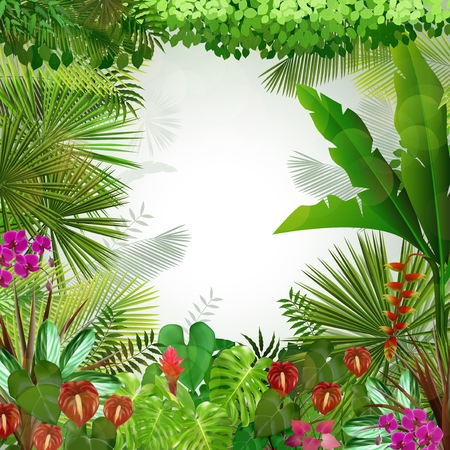 tropical: Tropical background beautiful