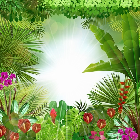 exotic plant: Tropical background beautiful