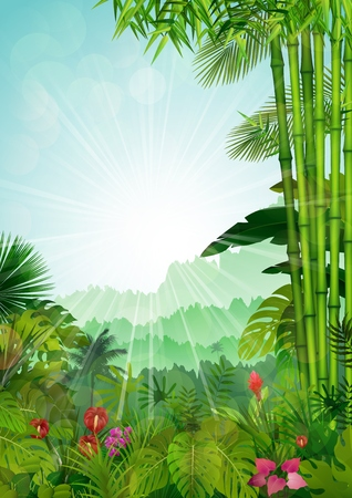 sunrays: Forest landscape of tropical background with sunrays