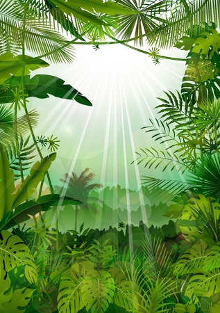 Forest landscape of tropical background with sunrays
