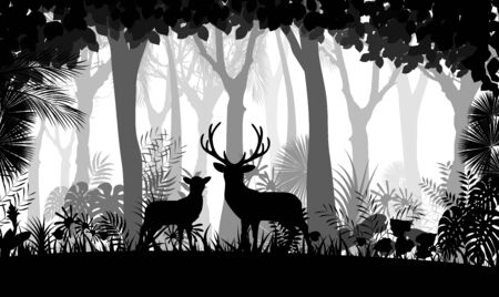 trees silhouette: Forest background with wild deer of trees