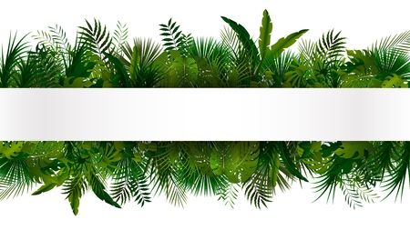 jungle green: Tropical foliage. Floral design background