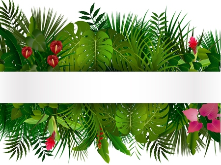 tropical tree: Tropical foliage. Floral design background