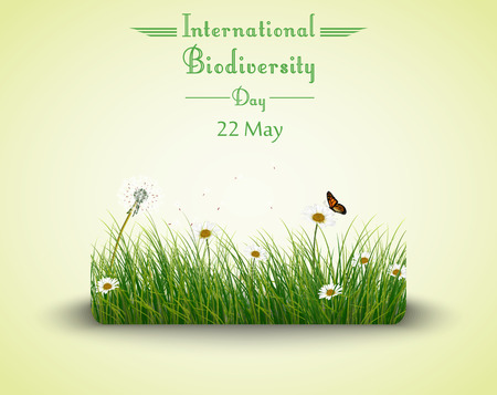 biodiversity: Vector illustration of Green grass with flowers and butterflies isolated background for Biodiversity international day