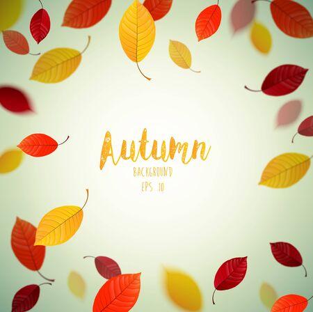 beech: Flying autumn beech leaves background