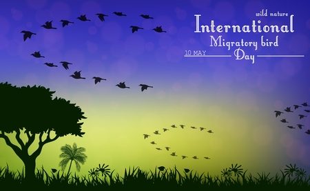 migratory: Birds migratory day on sunset background