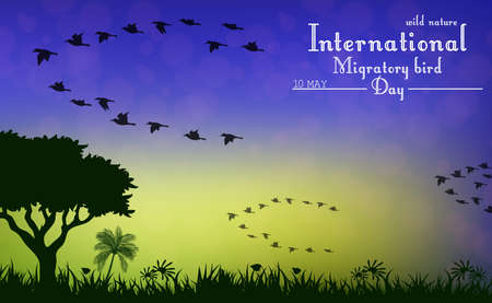 migratory: Vector illustration of Birds migratory day on sunset background