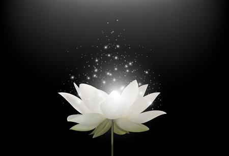 Ilustración del vector de la flor mágica del loto blanco sobre fondo negro