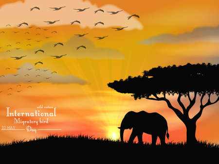 sunset sky: African elephant with flying birds on sunset sky