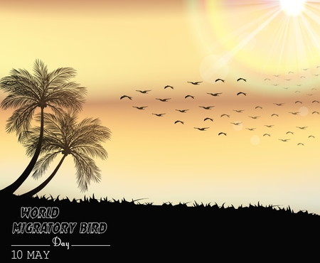 migratory birds: Migratory birds day in sunset light Stock Photo
