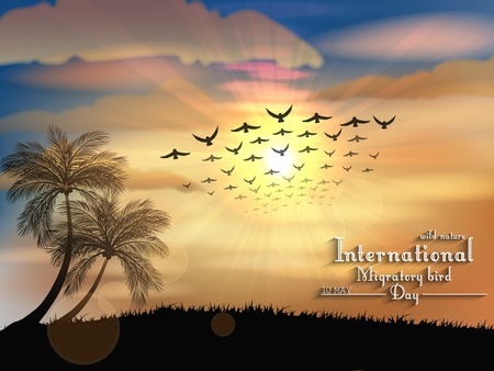 migratory: Vector illustration of Migratory birds day in sunset light Illustration