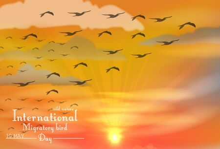 migratory: Vector illustration of Migratory birds day on sunset