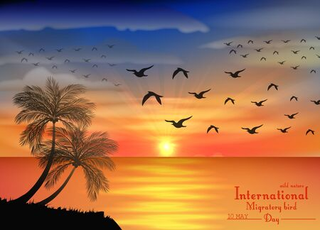 gold coast: Vector illustration of Photo of sunset on ocean for birds migratory day