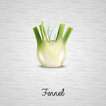 fennel: Fresh fennel illustration