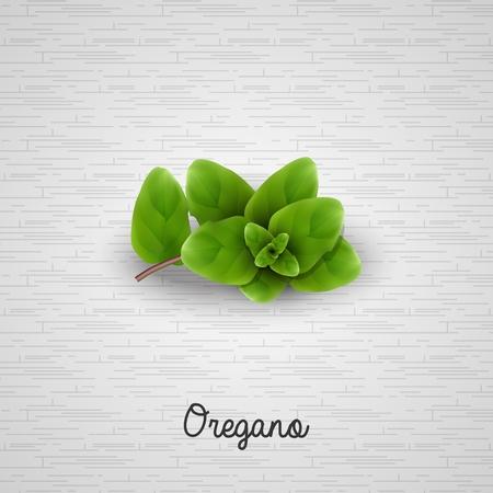 oregano: Fresh oregano sprigs