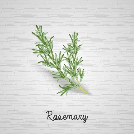 Rosemary leaves illustration Illustration